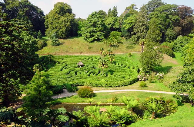 A maze made from hedging surrounded by fields and trees.