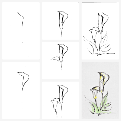 Step by step drawing of a lily.